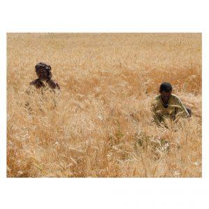 zwei äthiopische Farmer im Feld
