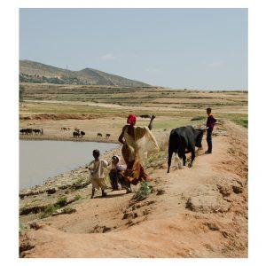 Äthiopier treiben ein Rind an der Wasserstelle